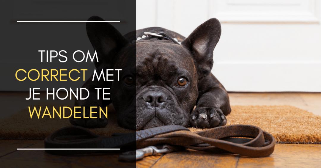 Tips om correct met je hond te wandelen