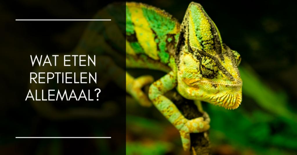 Wat eten reptielen allemaal?