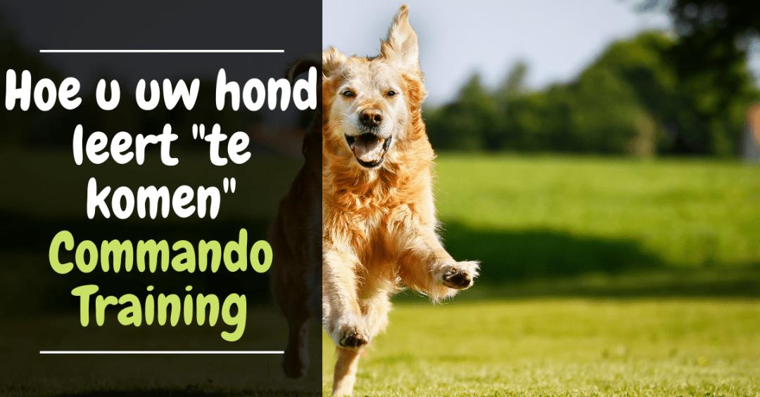 Hoe u uw hond leert te komen commando kom hondentraining gehoorzaamheid