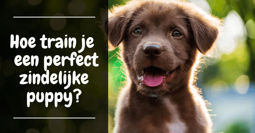 Hoe zorg je voor een zindelijke puppy - training zindelijkheid puppy