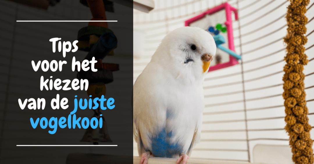 tips kiezen juiste vogelkooi beste kooi parkieten kanarie papegaai