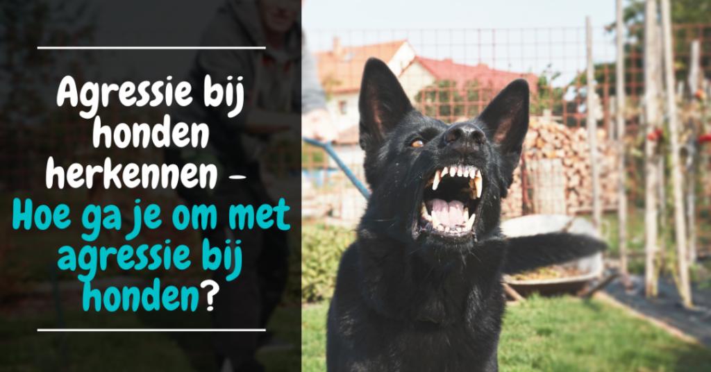 Agressie bij honden herkennen - Hoe ga je om met agressie bij honden?