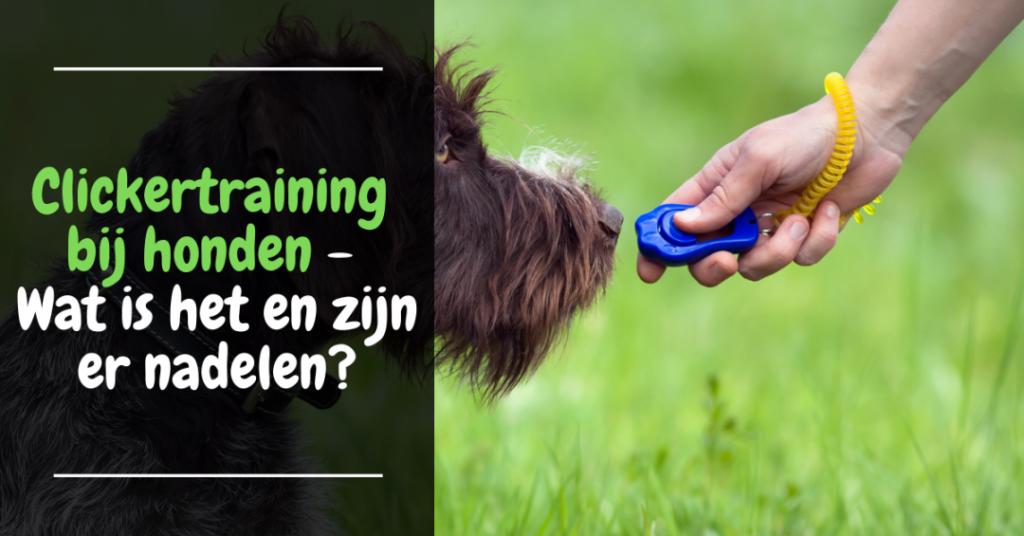 Clickertraining bij honden - Wat is het en zijn er nadelen?