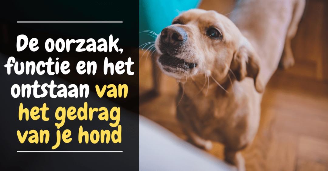 De oorzaak, functie en het ontstaan van het gedrag van je hond
