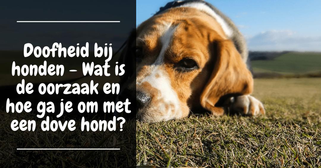 Doofheid bij honden - Wat is de oorzaak en hoe ga je om met een dove hond?