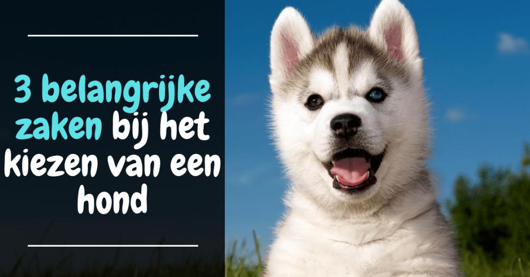 Drie belangrijke zaken bij het kiezen van een hond - puppy