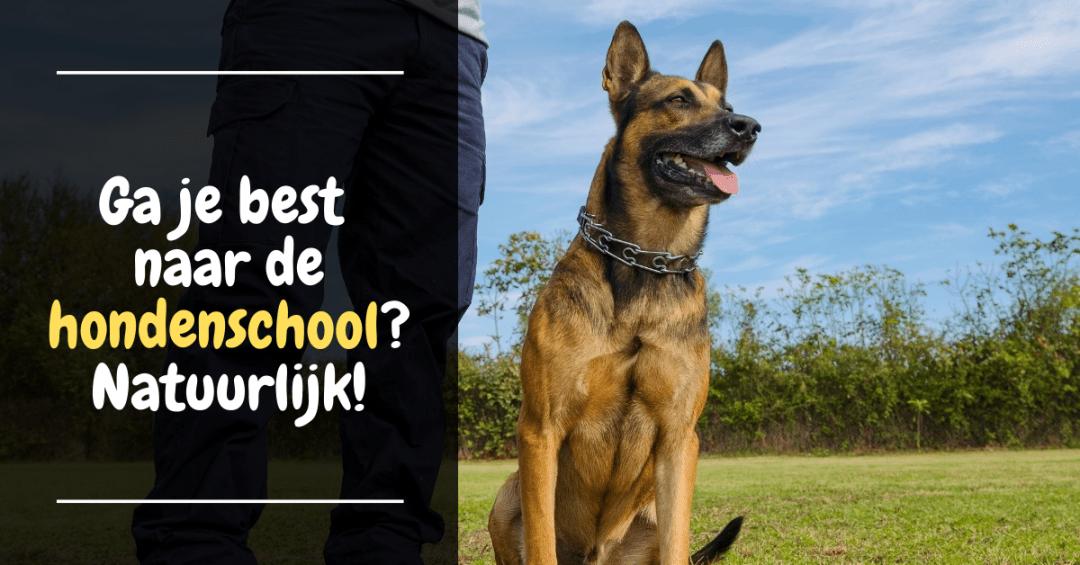 Ga je best naar de hondenschool? Natuurlijk!