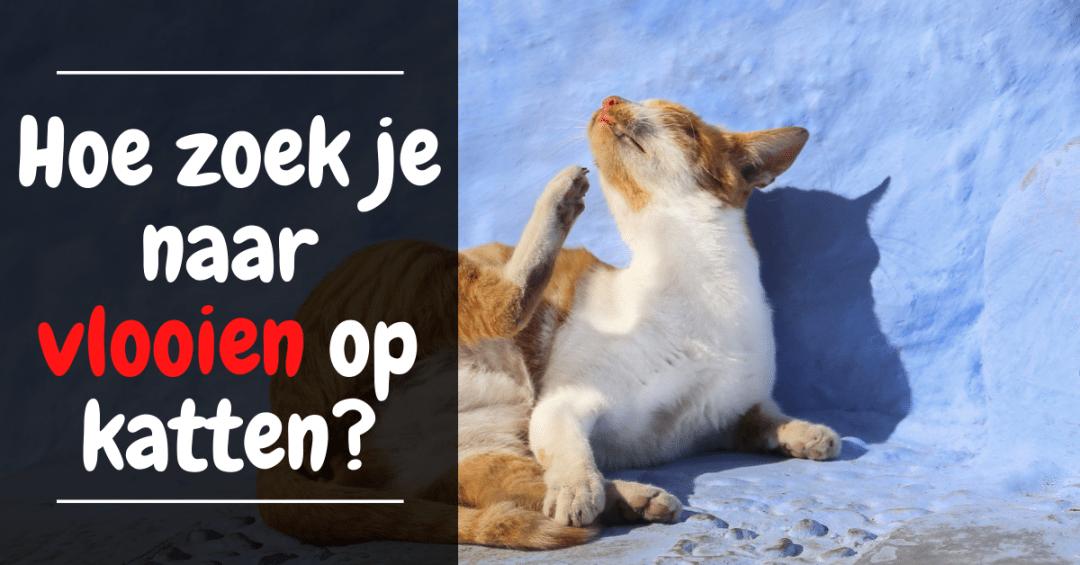 Hoe zoek je naar vlooien op katten