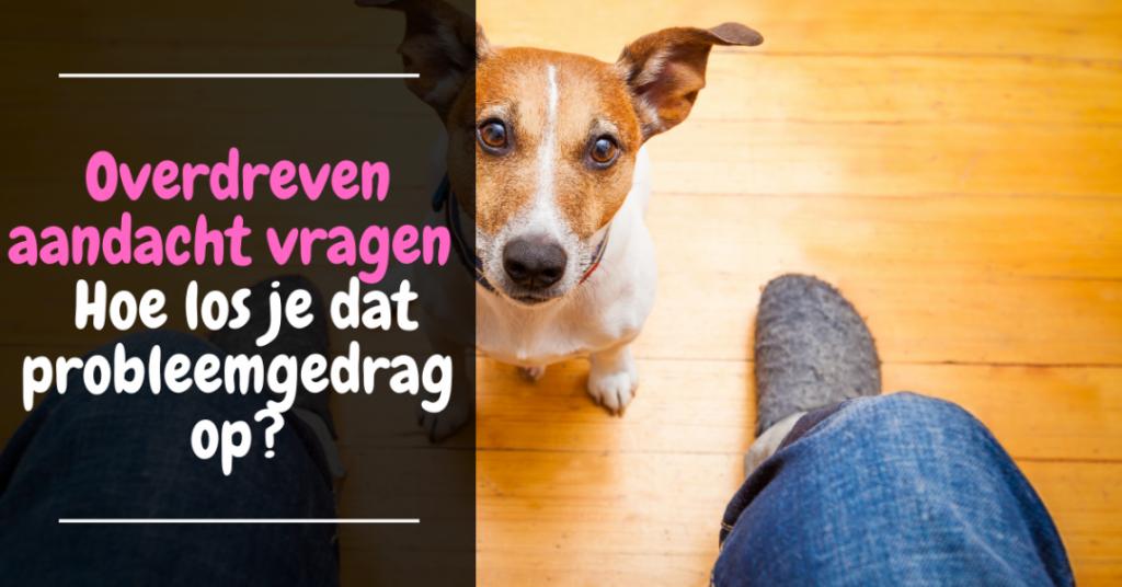 Hond Overdreven aandacht vragen - Hoe los je dat honden probleemgedrag op