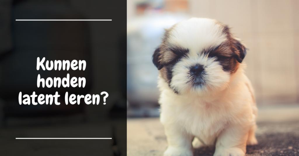 Kunnen honden latent leren?