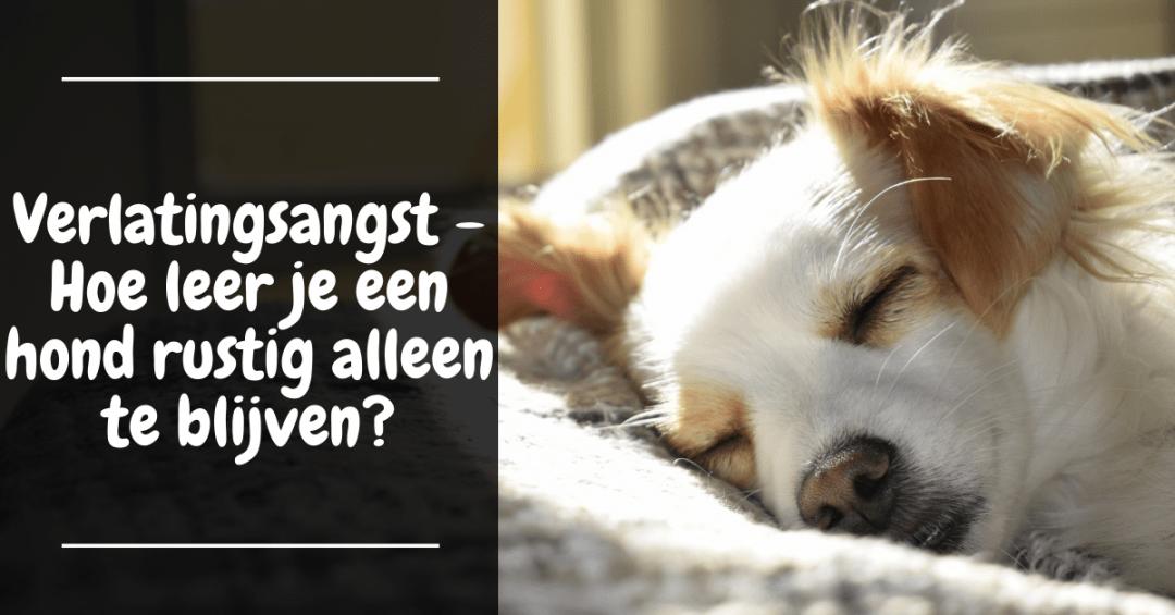 Verlatingsangst - Hoe leer je een hond rustig alleen te blijven?