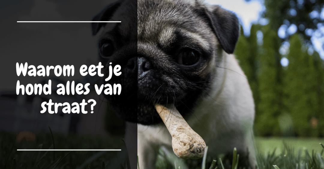 Waarom eet je hond alles van straat?