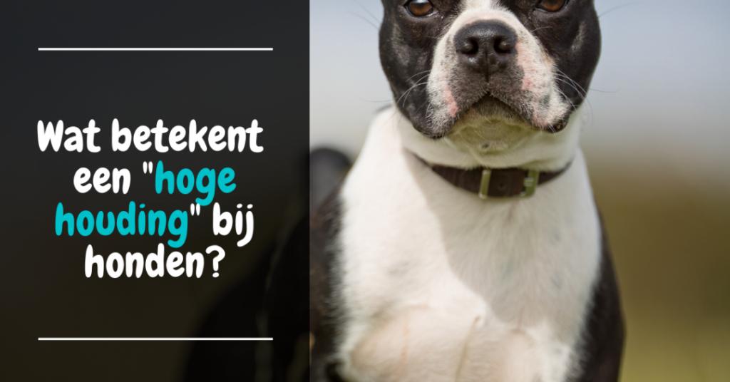 Wat betekent een hoge houding bij honden