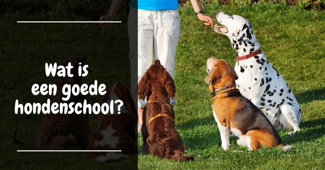 Wat is een goede hondenschool?