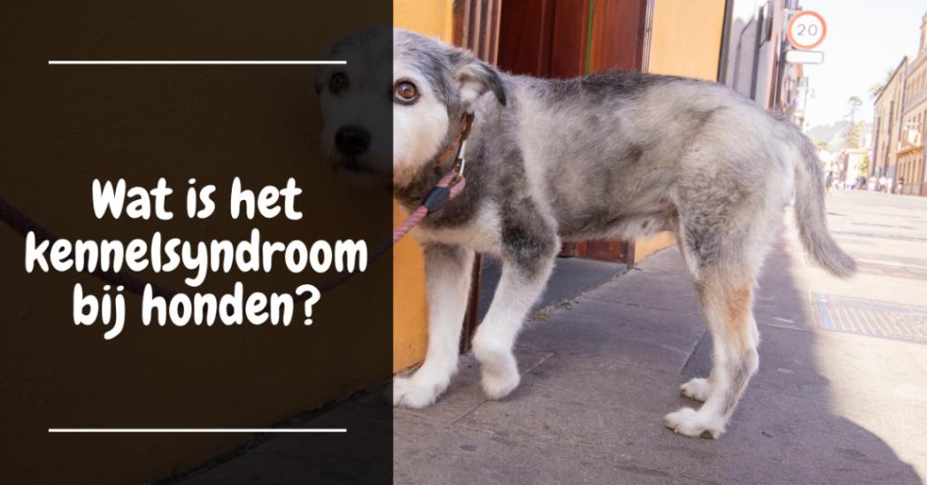 Wat is het kennelsyndroom bij honden?