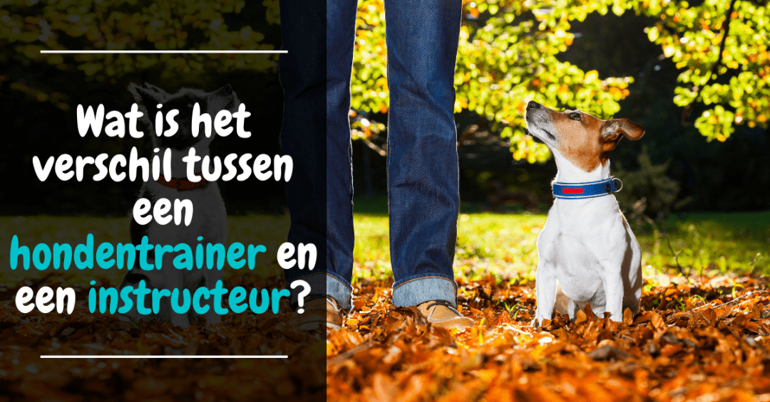 Wat is het verschil tussen een hondentrainer en een instructeur?
