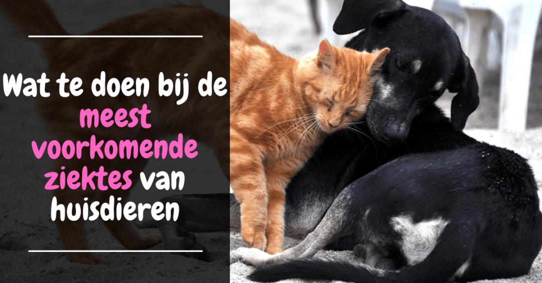Wat te doen bij de meest voorkomende ziektes van huisdieren