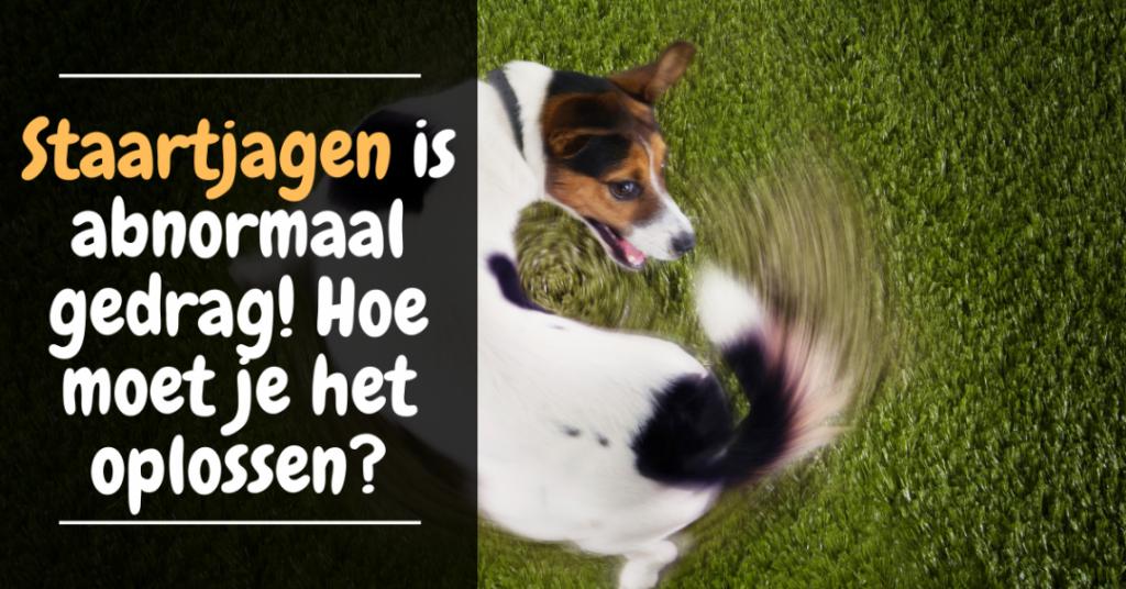 staartjagen abnormaal gedrag gedragsprobleem honden verveling