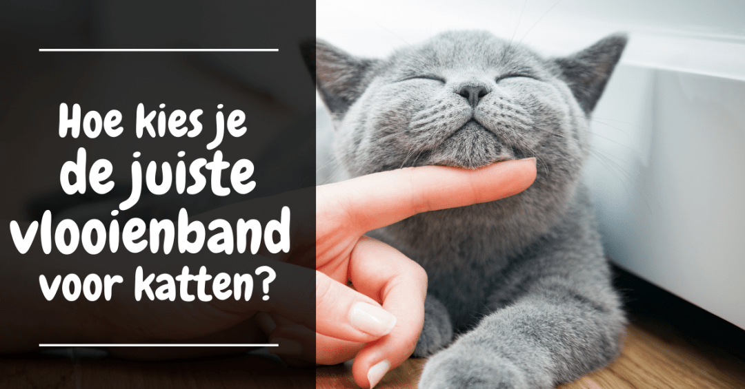 vlooienband voor katten kiezen hulpgids vlooienband katten