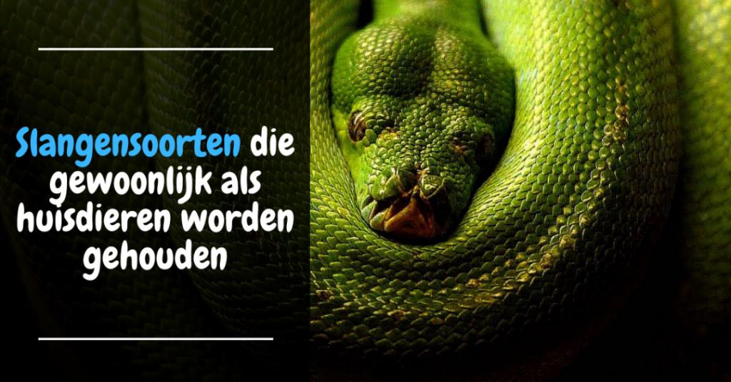 Slangensoorten die gewoonlijk als huisdieren worden gehouden