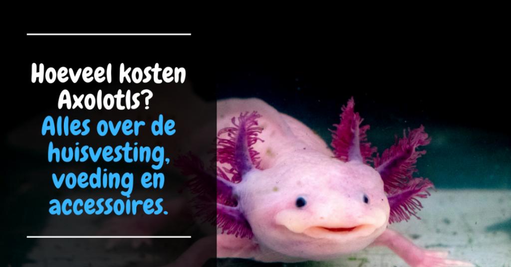 hoeveel kosten axolotls - huisvesting voeding aankoop en accessoires