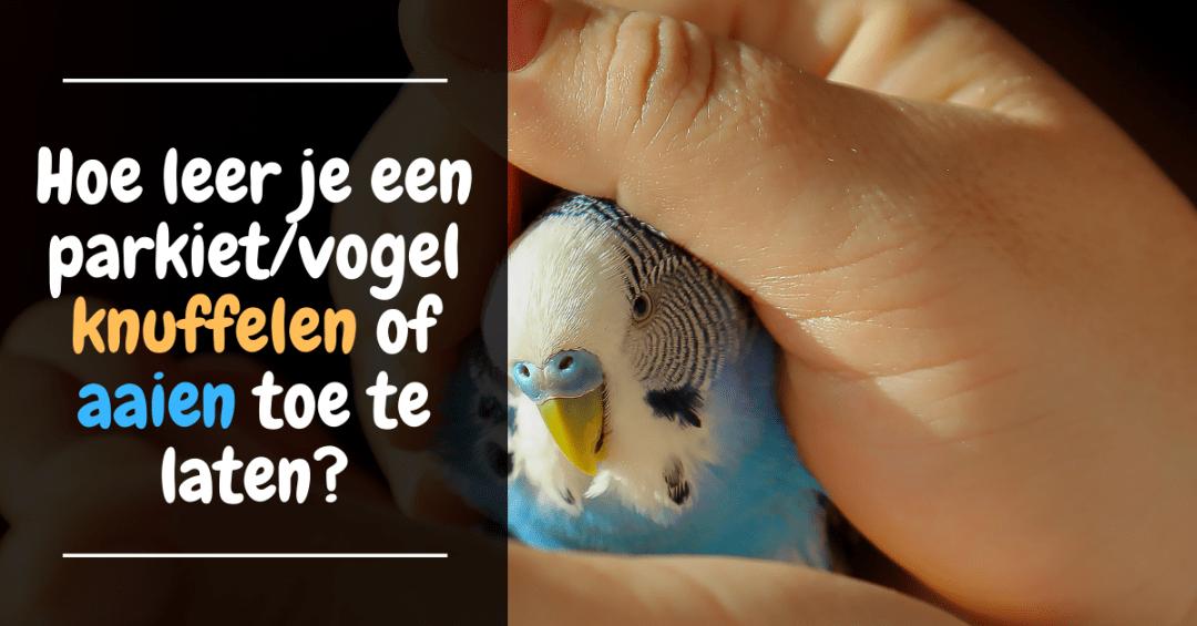 Hoe leer je een parkiet/vogel knuffelen of aaien toe te laten