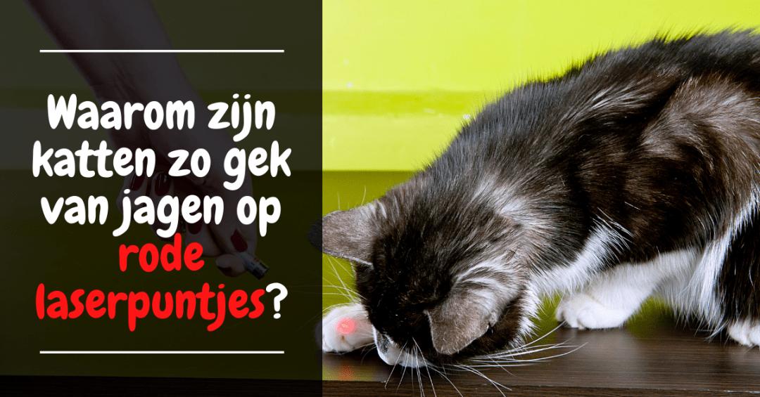 Waarom zijn katten zo gek van jagen op rode laserpuntjes?