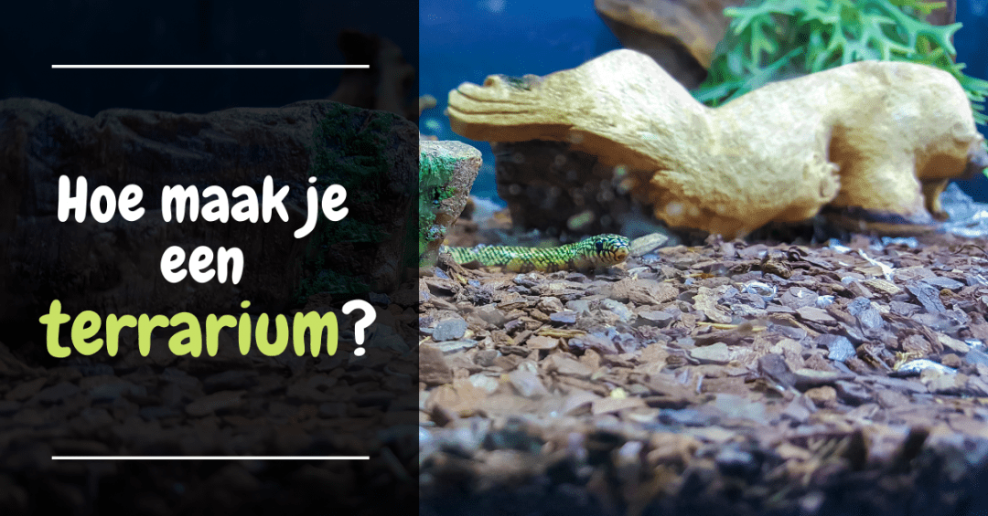 hoe maak je een terrarium voor reptielen terrariumbouw gids