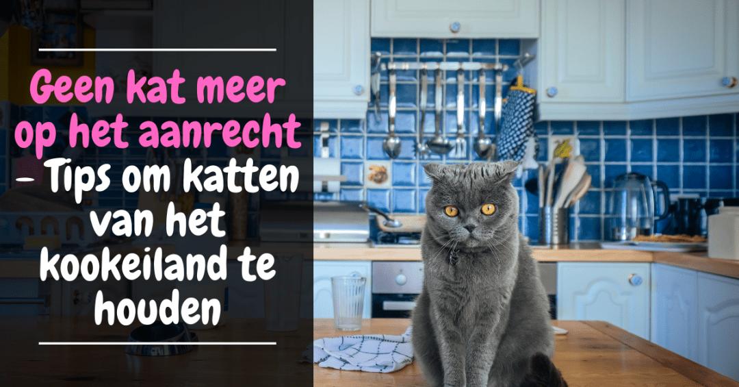 Geen kat meer op het aanrecht - Tips om katten van het kookeiland te houden kan van tafel houden