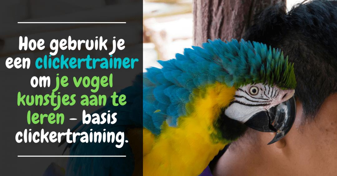 Hoe gebruik je een clickertrainer om je vogel kunstjes aan te leren - basis clickertraining