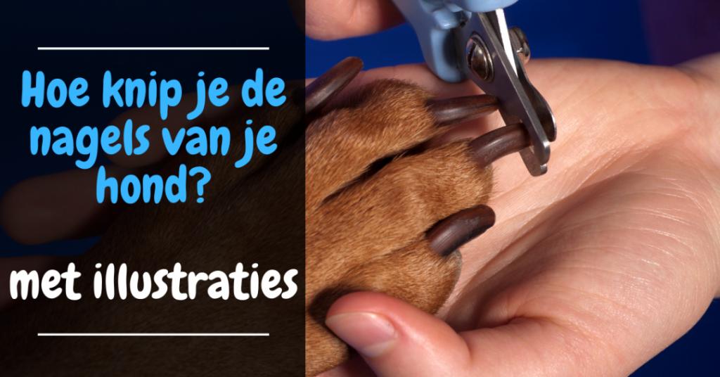 Hoe knip je de nagels van een hond complete gids met afbeeldingen tutorial nagelknippen hond tips