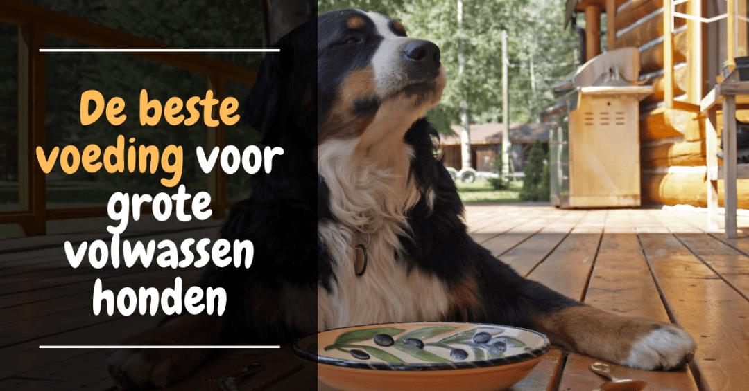 beste voeding grote honden orijen originals volledige voeding review