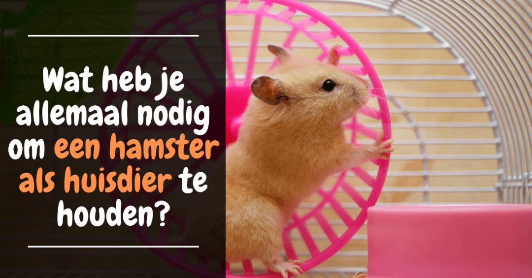 hamster als huisdier houden welke kooi benodigheden hamster wiel hamster voeding verzorging