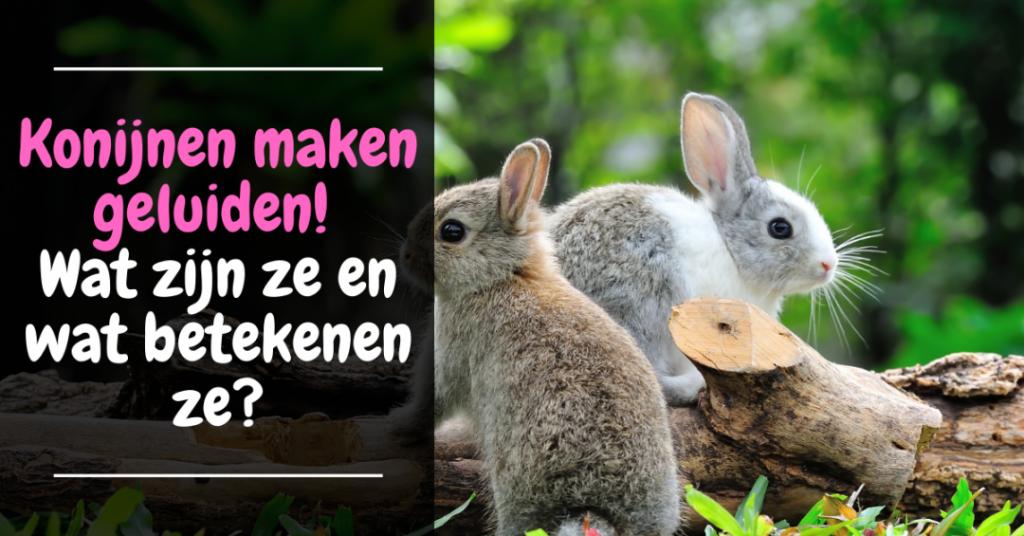konijnen maken geluiden betekenis geluid konijn betekenis gedrag konijn