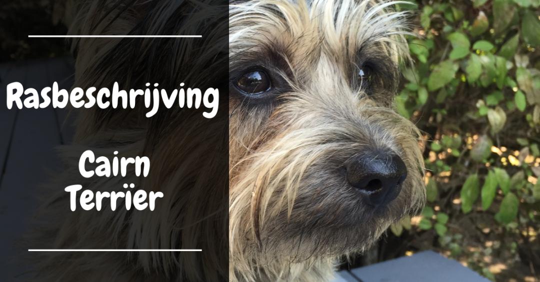 rasbeschrijving cairn terrier gedrag verzorging karakter omgang