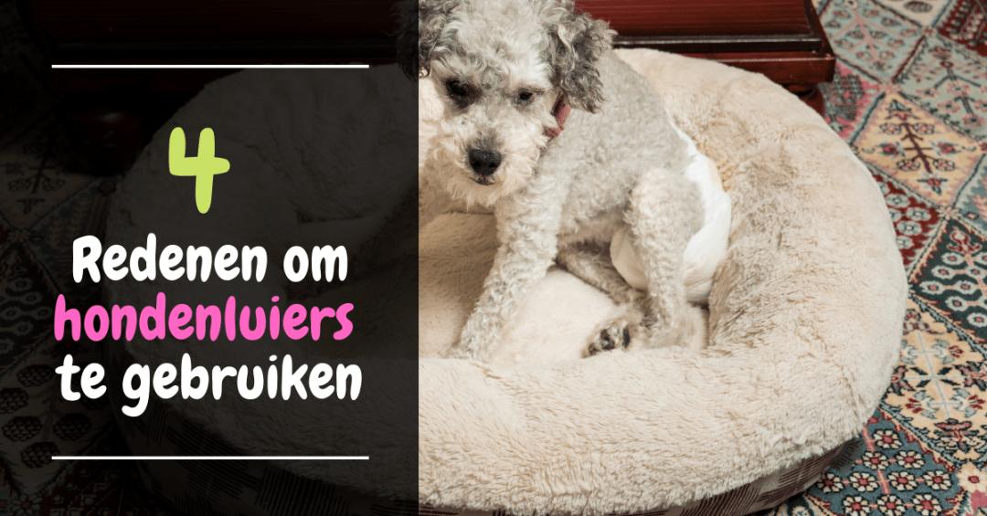 4 Redenen om hondenluiers te gebruiken incontentie hond loopsheid teef luier